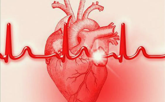 heart webquest Have a heart a webquest for biology standards decribe the factors affecting the blood flow through the cardiovascular system describe normal heart sounds and.