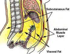 abdominal-fat j